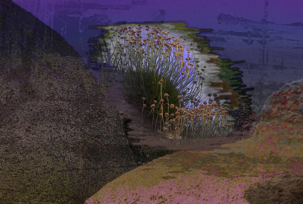 JAN LIPINA Květy v poulmanachu31x46